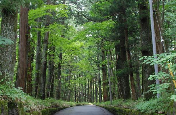 Photo Three from http://www.travel-around-japan.com/k36-05-cedar-avenue.html