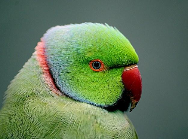 Photo Fifteen by Bernard Spragg. NZ from Christchurch, New Zealand, CC0, via Wikimedia Commons