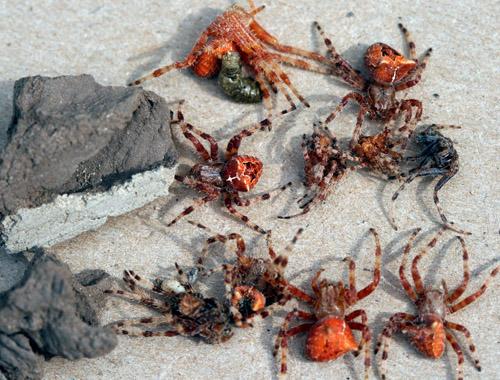Nests Mud Build Wasps