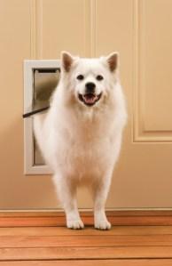 dog friendly homes