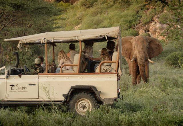 Visitors at the lodge get to see the  wildlife in the saruni samburu lodge conservancy