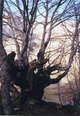 cropped-unnamed-file11