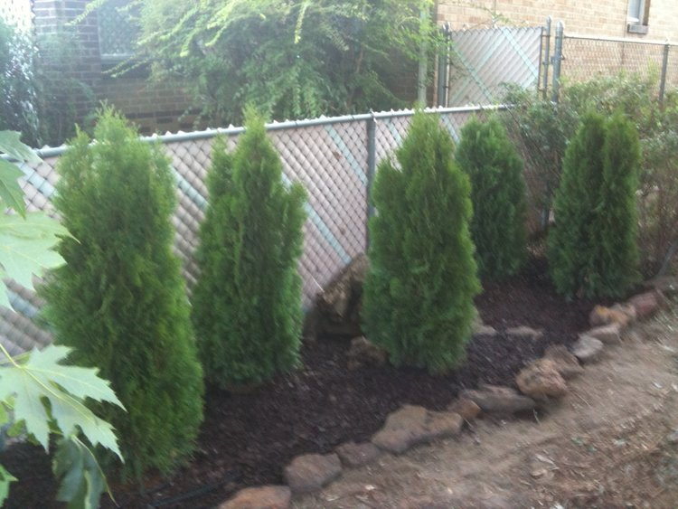 Hiding the chain link fence with trees to improve curb appeal