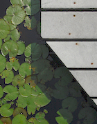CCNS-PL Beech Forest Lily Pond Pier.jpg