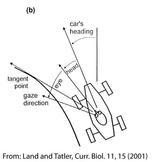 A diagram showing the parameters: the car's heading, the head direction and the eye direction.