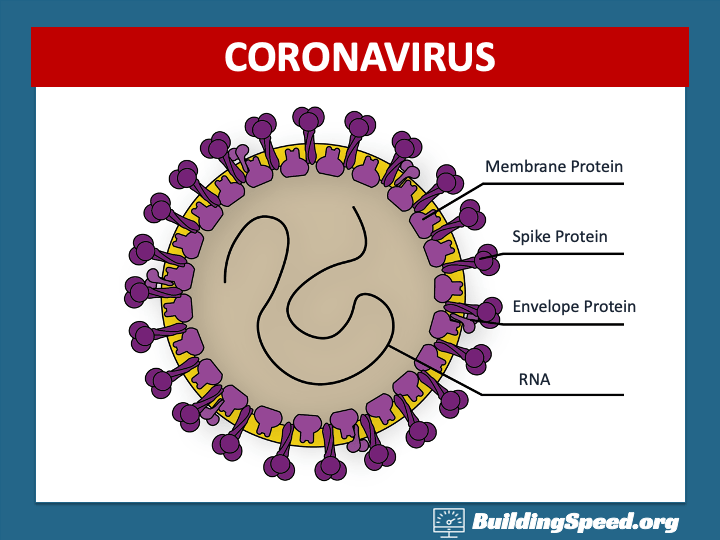 A diagram of a coronavirus, showing the RNA inside and the proteins on the outside that give it its name.