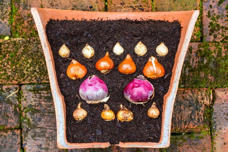 Layered pot planting bulbs buildmumahouse Jola Piesakowska