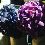 Even hydrangeas look exotic in the flower shop libertylondon !