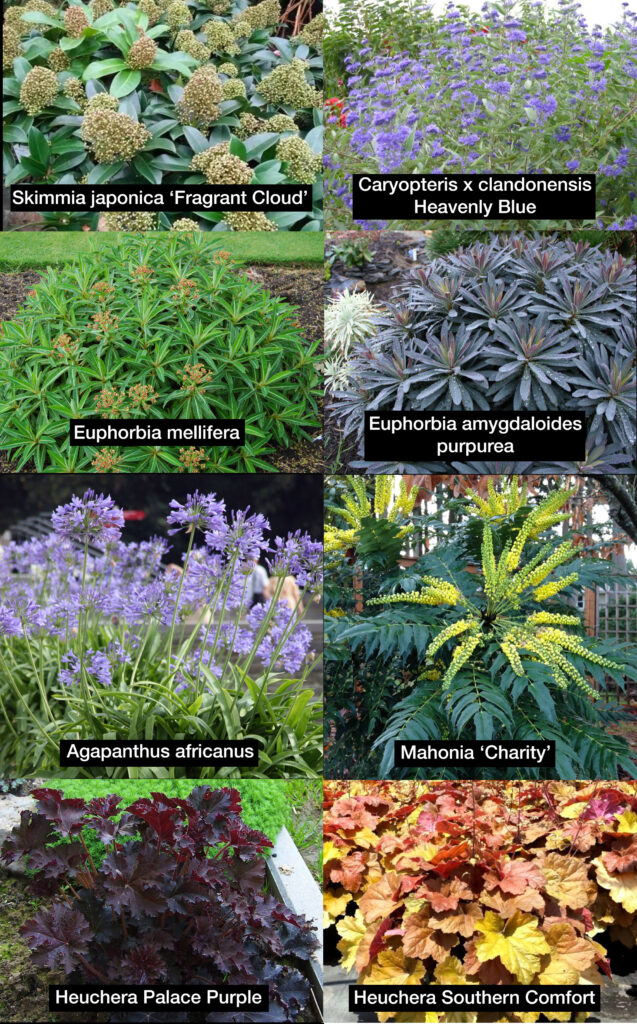 low maintenance, accessible garden, buildmumahouse, Jola Piesakowska, Jonathan Kemp