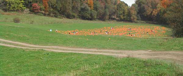 pumpkin-patch-drive