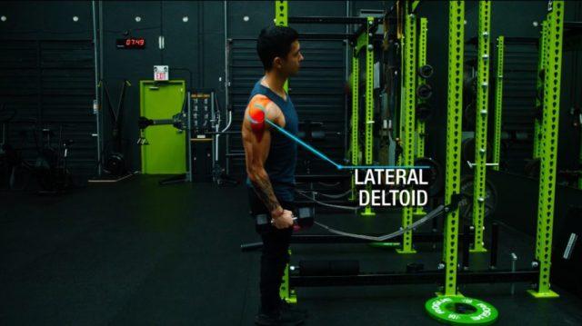Push pull legs lateral raises