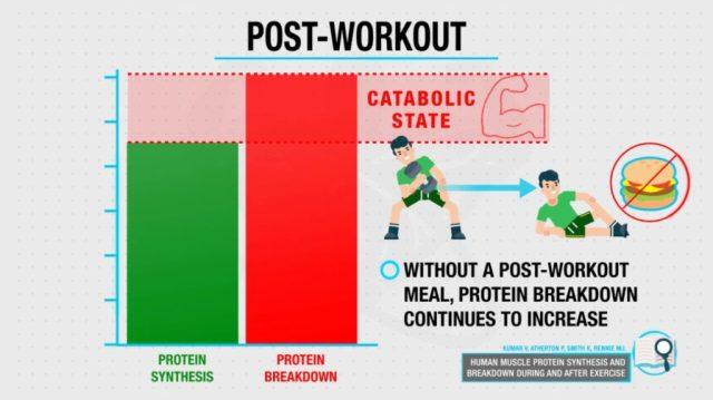 Postworkout catabolic state