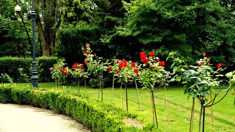 Willa Edwarda Herbsta - ogród