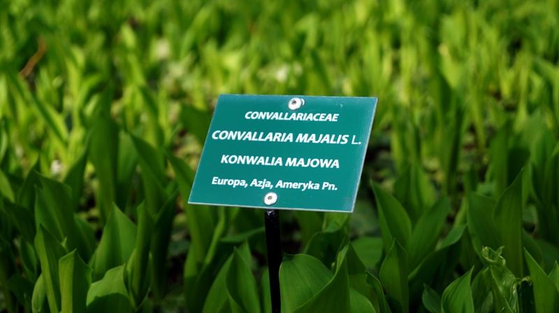 Każdy kwiat, krzew i drzewo są w Łodzkim Ogrodzie Botanicznym wzorowo opisane