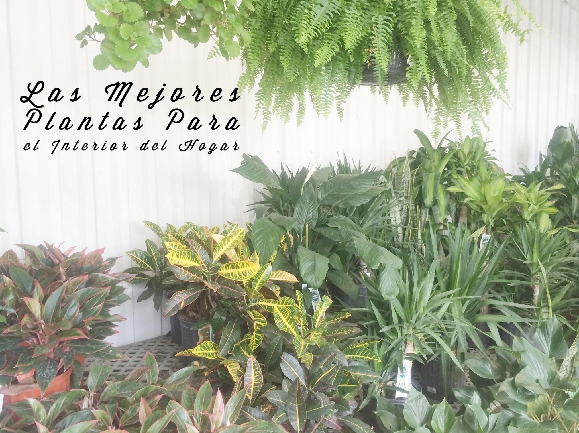 Las mejores plantas para el interior del hogar for Plantas decorativas para el hogar