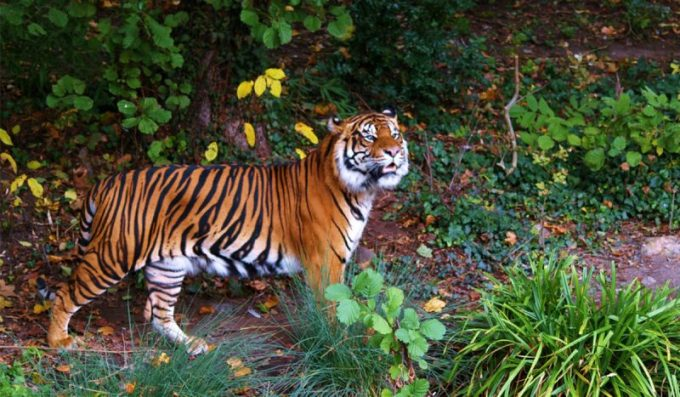 Bermacam Hewan Dan Tumbuhan Langka Di Indonesia Menarik