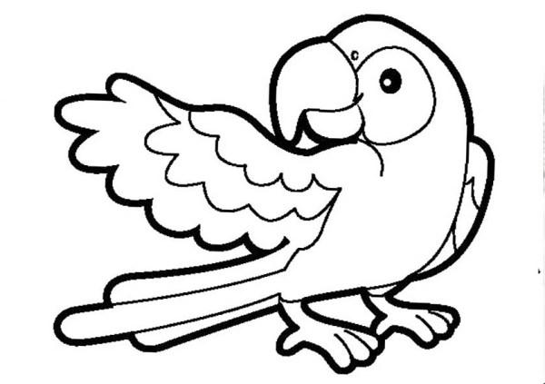 Картинка Птичка Раскраска Для Детей