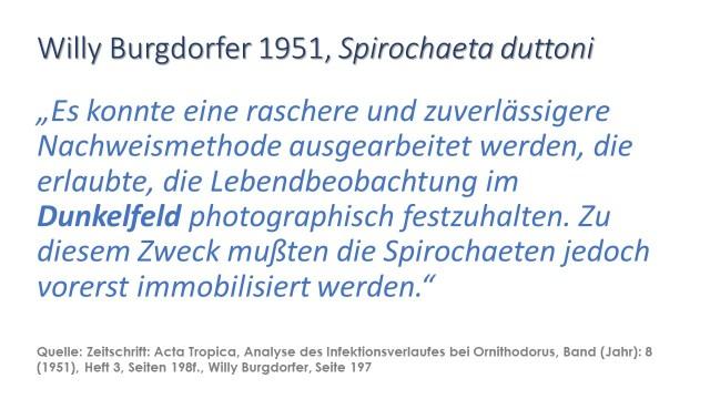 Spirochaeta duttoni im Dunkelfeld Willy Burgdorfer