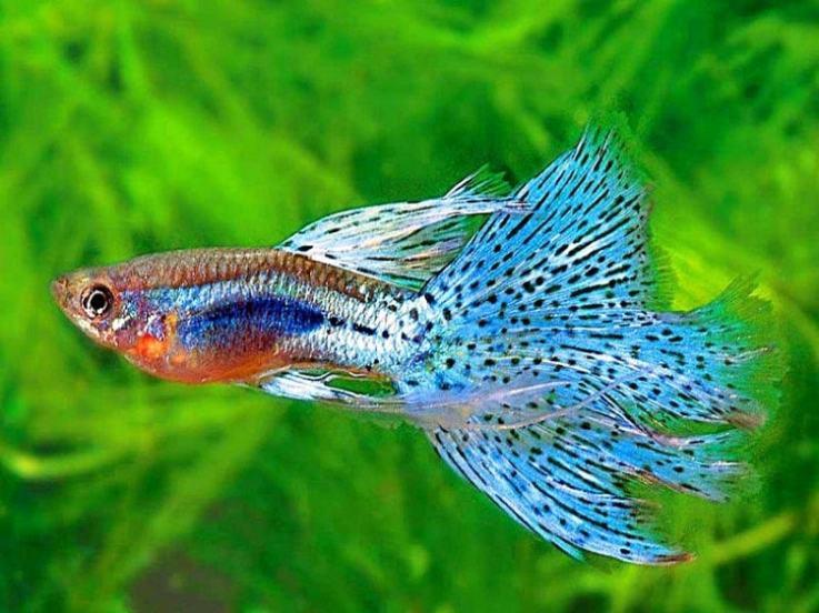 Unduh 7500 Gambar Ikan Ikan Air Tawar Terbaru