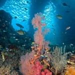 Inilah 10 Ikan Hias Air Tawar Terindah di Dunia