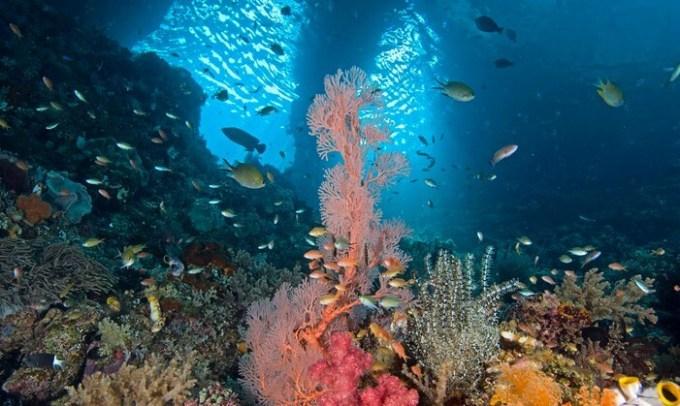 ikan hias air tawar terindah beraneka ragam