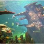 27 Jenis Ikan Hias Air Tawar Terlengkap Urut dari A-Z