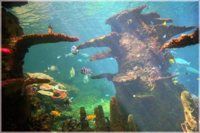 Jenis ikan hias air tawar cantik