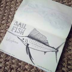 Spoonchallenge 15 Sailfish drawing