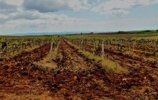 sakar vineyards