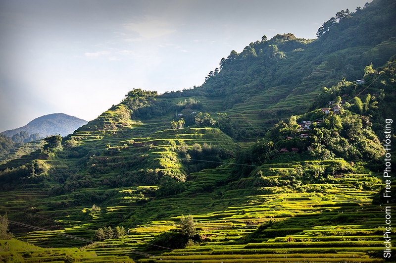 Rice_Terraces_01