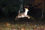 Cuddeback Buck