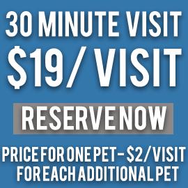 30 minute pet visit 19.00