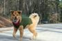 10 Tricks for Catching a Runaway Dog