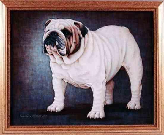 Best of Breed: CH Roscoe's White Lighting