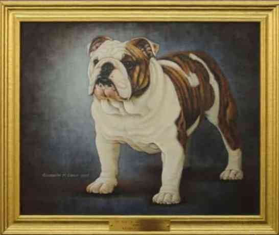 Best of Breed: CH Luv-A-Bull Sir Stanley