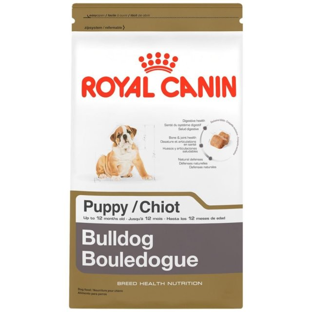 standard breed english bulldogs