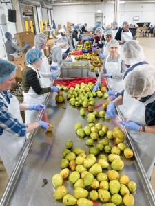 Packing Pears at Greater Chicago Food Depository