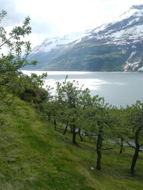 Fjord Lofthus