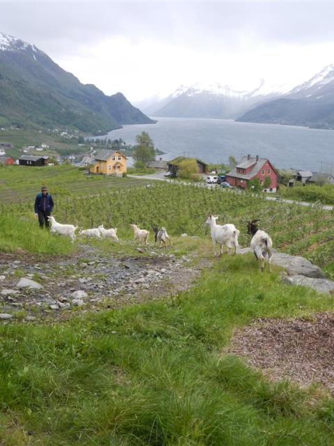 Henry in Norwegen
