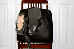 The chair that Bunny the bad French Bulldog ate