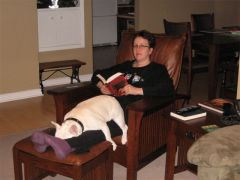 Vicious French Bulldog savaging his owner's legs.