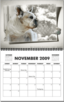 Tessa on the French Bulldog Village Calendar