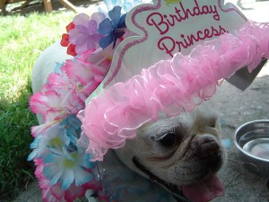 The Birthday Princess - 11 years young