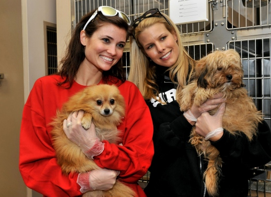 "Cassandra DiPietro, wife of NHL hockey player Rick DiPietro, and Beth Stern, wife of Howard Stern, hold two of the 150 dogs that arrived Wednesday at the North Shore Animal League. ""OMG u guys, it's just like getting a puppy from a pet store! Let's get all our friends one for Christmas""."