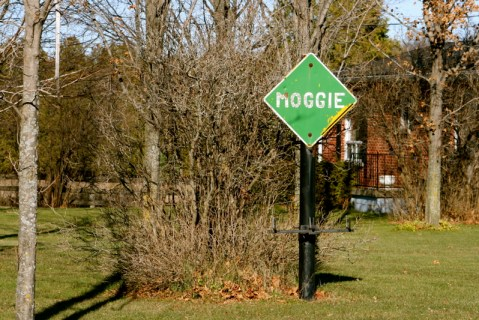 "A ""Moggie"" road sign - cats live here?"