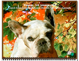 Tessa is September's cover French Bulldog
