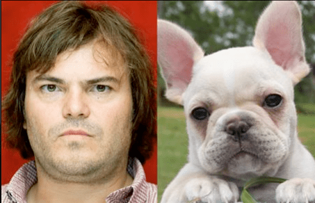 Jack Black and a French Bulldog