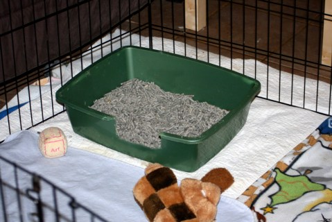 how to litter box train puppies