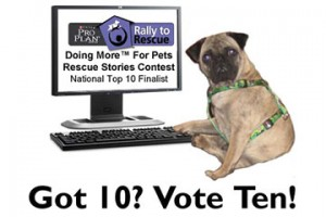 Vote for Ten in Purina's Rally for Rescue