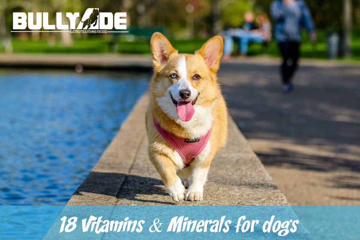 vitamins for dogs